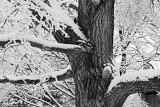 Epilogue of a winter storm
