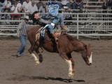 Yuma Rodeo