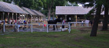 Morning at Saratoga Races #2