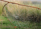 Web on a misty day.
