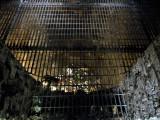Lismore Ice House, Millennium Park