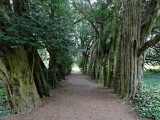 Tree lined path - Lismore Castle Gardens