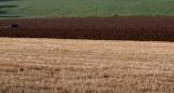 An Irish field.