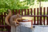 7329 Freddy says  I love my Kirkland peanuts.