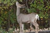 7476 Deer