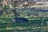 7486 Deer