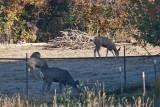 7494 Deer
