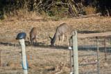 7495 Deer