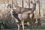 7496 Deer.jpg