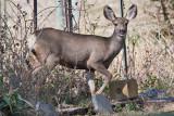 7499 Deer
