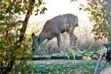 7502 Deer