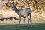 7503 Deer