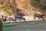 7505 Deer