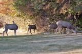 7506 Deer