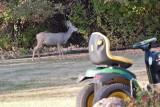 7507 Deer.jpg