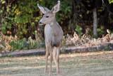 7512 Deer