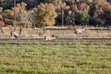 7516 Deer