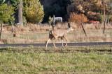 7517 Deer