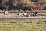 7518 Deer.jpg