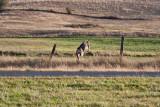 7519 Deer.jpg
