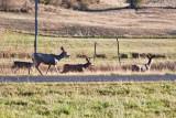 7520 Deer