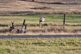 7521 Deer