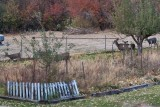 7528 Deer