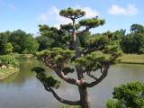 10-15 Chicago Botanic Gardens