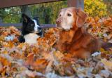 Mollie and Sterling in leaves