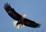 Iowa/Wisconsin Eagles Part 2