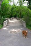 steelbridge2.jpg