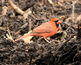 bird_watching_10_feb_2010