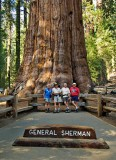 General Sherman sequoia tree