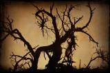 Tree in monochrome