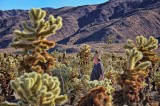 Lost among the cacti