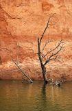 Damp tree