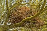 Nest in palo verde tree