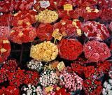 Flowers in Nice