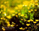 Jun 2: Yellow