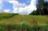 Rolling  Field