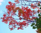 Fall  Season  Colours