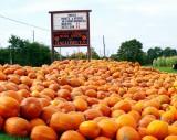 Pumkins  Harvest