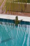 watertrappelende Iguana