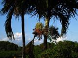Palmtree in my garden