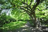 Schatten spendender Baum