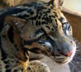 San Antonio Zoo and Aquarium Photos