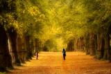Lime Tree Avenue - Walk