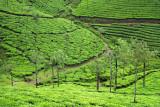 Kerala 31