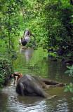 Kerala 34