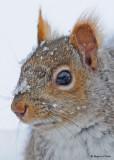 20090131 155 Squirrel - SERIES.jpg